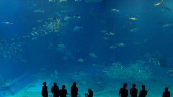 13 水族館の中で
