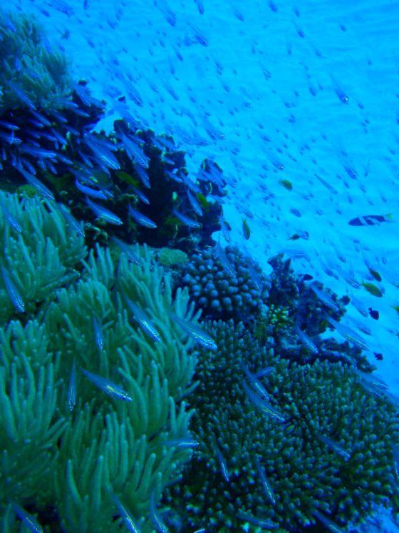 24 珊瑚と魚