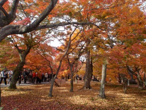 62 東福寺