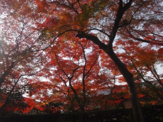 60 東福寺