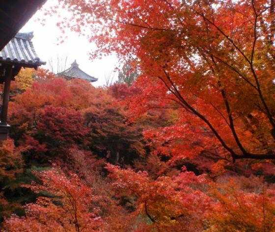 67 東福寺