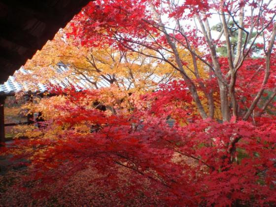 65 東福寺