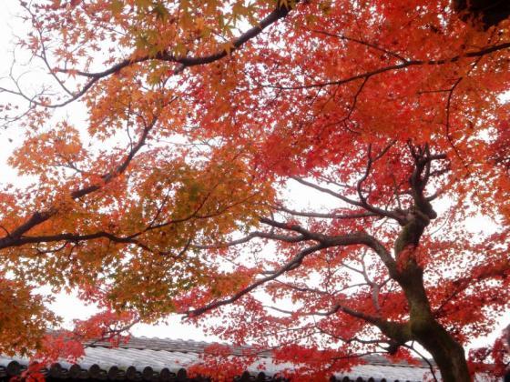 72 東福寺