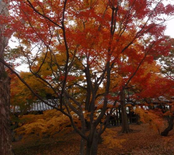 73 東福寺
