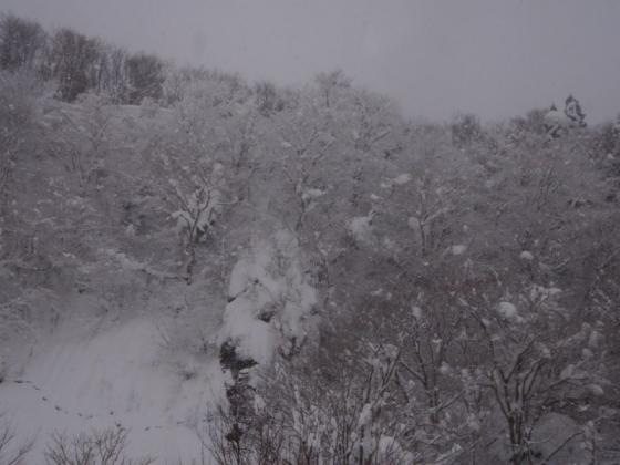 09 林も雪化粧