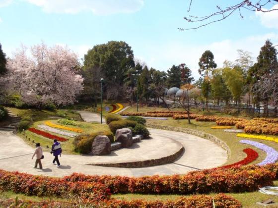08 花の谷の桜