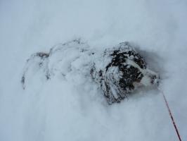 新雪を堪能中!