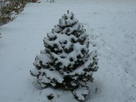 そこら中にクリスマスツリーが・・・