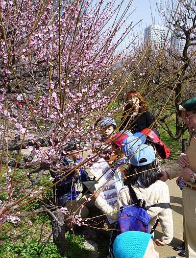 大坂城の梅の花2010