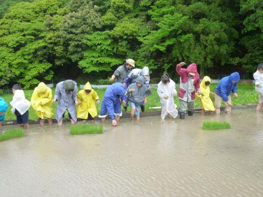 田植体験2010