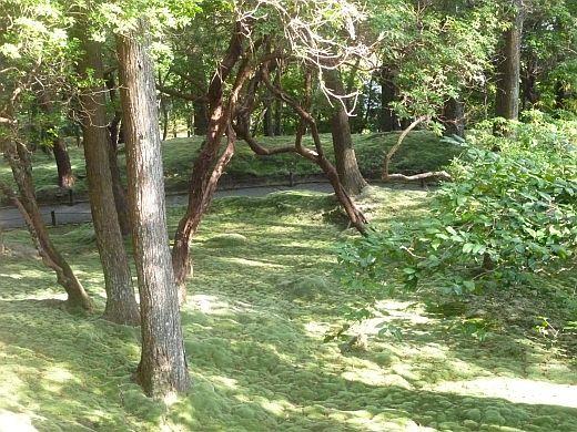 苔寺の庭-3