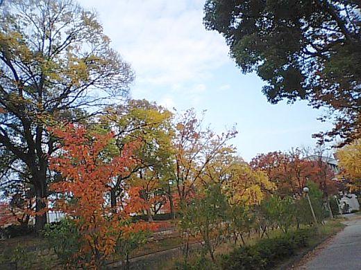 公園の紅葉2010-2
