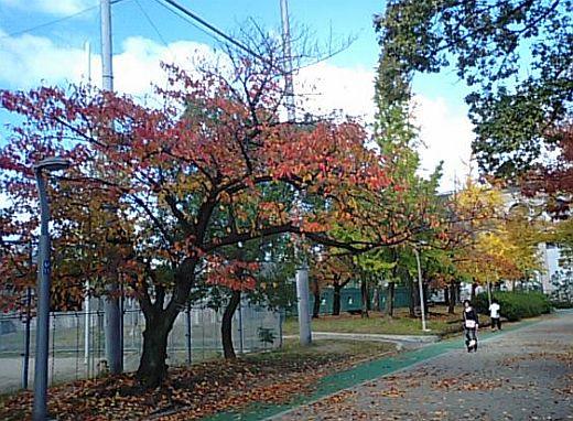 真田山公園2010秋