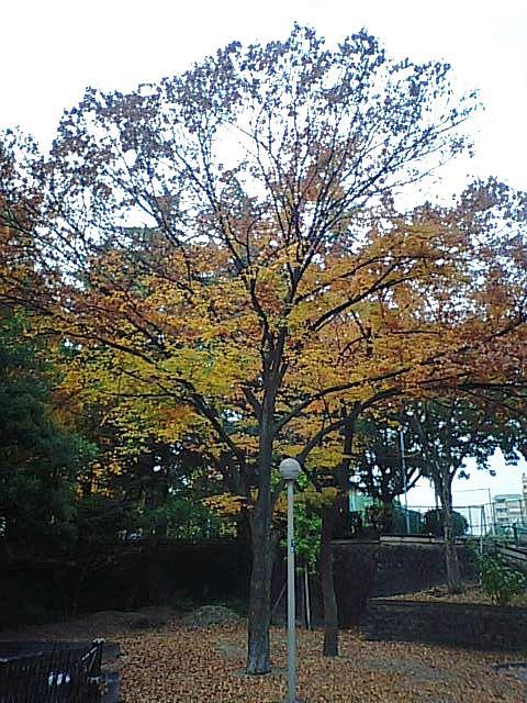 公園の紅葉2010-1