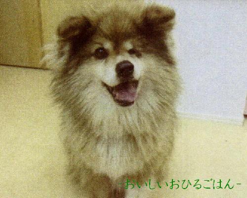 momokoIMG_0001_3_20110325230838.jpg