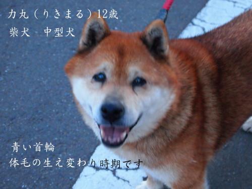 rikimaru_0001.jpg