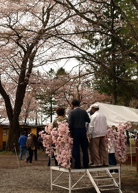 桜のトンネルをバックに写真が撮れるという台なわけで。。。