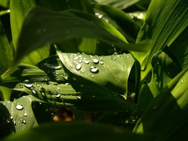 雨上がりの午後~