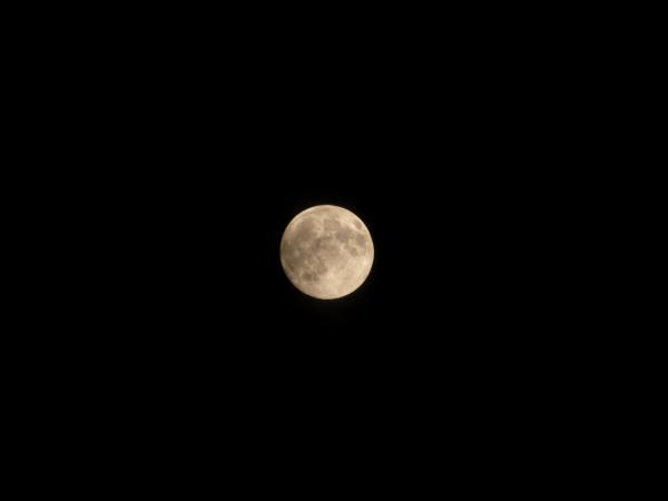お月さま~   あ~秋だな~~