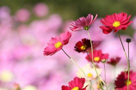 紅い花00