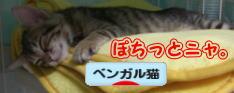 sasuke-bana2.jpg