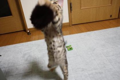 sasukexxx16.jpg