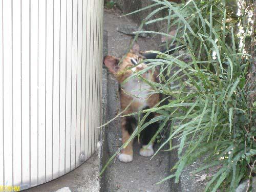 故郷の猫?