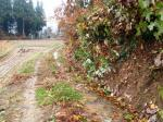 落ち葉で埋まった水路
