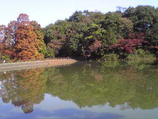 秋の狭山公園・たっちゃん池