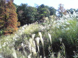 秋深まる狭山公園