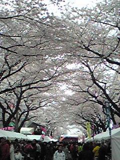 東村山駅東口桜まつり