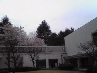 桜に包まれる国立ハンセン病資料館