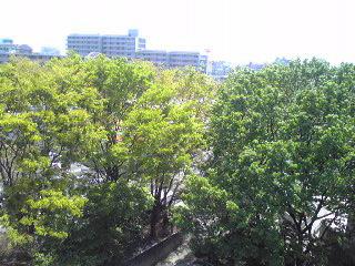 庁舎から見る新緑