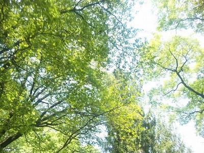 狭山公園の眩しい新緑