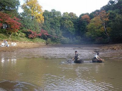 たっちゃん池7