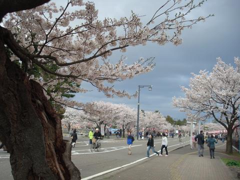 高田公園までの道