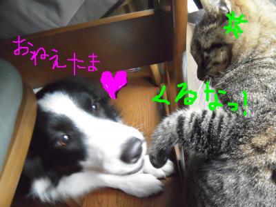 snap_sawadee76_20091205441.jpg