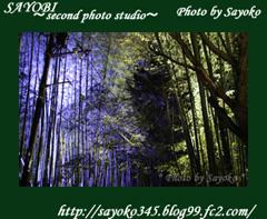 二番目の小夜子の写真館♪0155