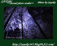二番目の小夜子の写真館♪0156