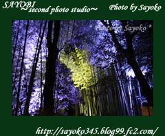 二番目の小夜子の写真館♪0157
