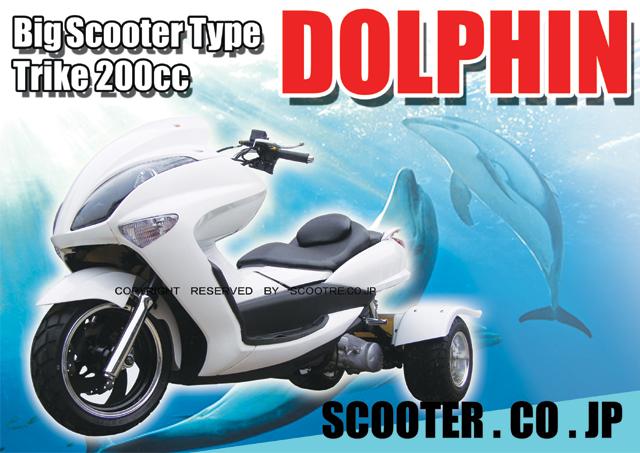 dolphin_w3_20110109103657.jpg