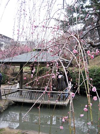 大倉山梅まつり3364