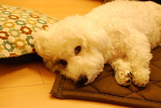 kotatsu2-1.jpg