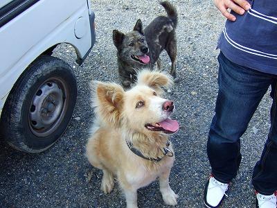 山田牧場の犬