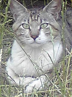 090619_0708~02.猫