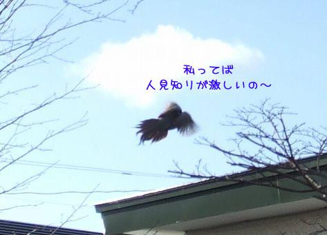 081215-hitukosi11.jpg