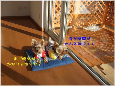 081215-hitukosi9.jpg