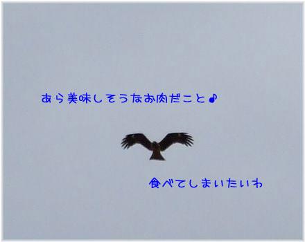 081217-souji10.jpg