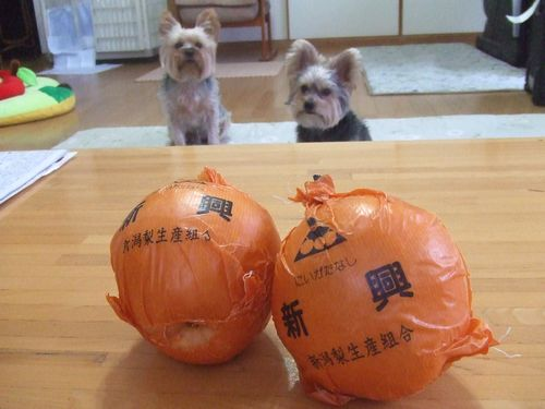 081221-nashi1.jpg