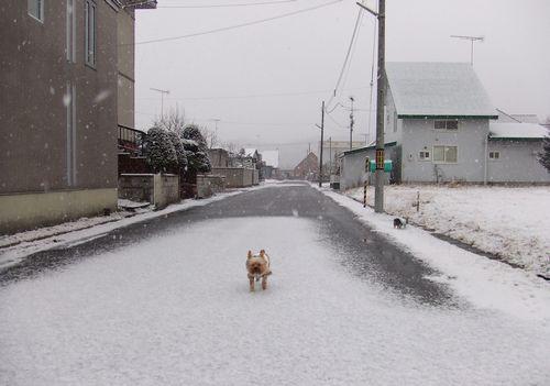 081221-yuki1.jpg